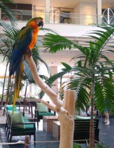 ルネッサンス沖縄_エントランスにいる鳥さん2
